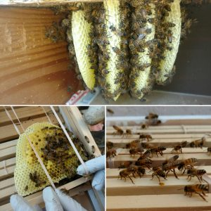 Bee Man Dan