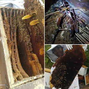Welcome to Bee Man Dan