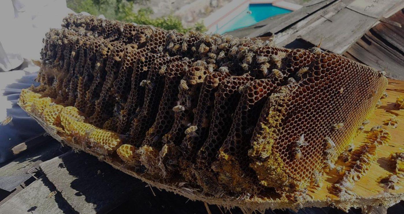 Bee Man Dan Slide