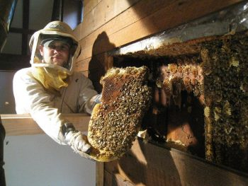 With Los angeles Bee Removal Services Enjoy a Safe Living