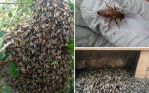 Humane Bee Control In San Diego
